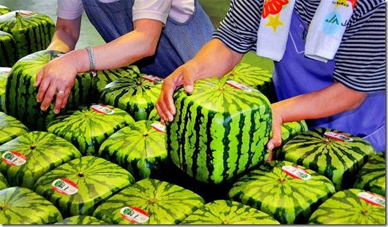 Squarewatermelons